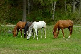 lovak legelészve
