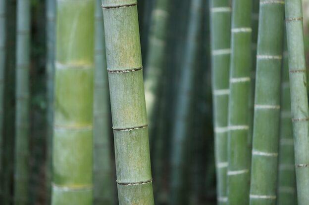 Egyenes bambuszkaró